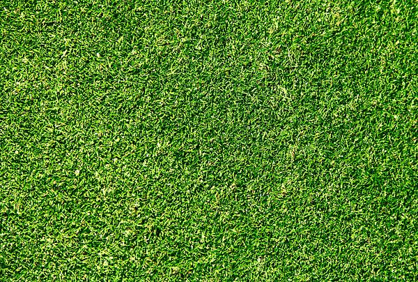 康体人造草